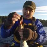 Film: Padling og Jakt 2014 – sjøfugljakt fra kajakk