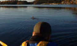 Innskrenkninger i jakttid på sjøfugl